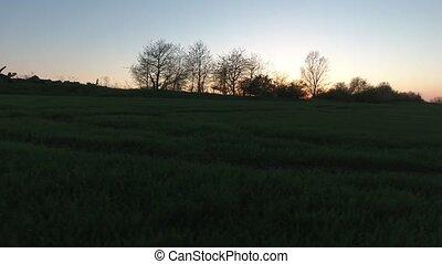 sunset field grass video meadow landscape evening farm