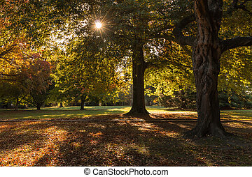 parkland in autumn - colorful trees in parkland in autumn
