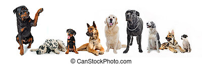 group of dogs - cute rottweiler say hello with his paw to a...