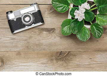 retro camera and a flower in a pot, flat lay