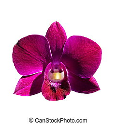 Orchid flower 628 - Orchid flower isolated on white