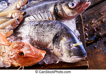 Assorted fresh marine fish in a crate of ice with focus to...