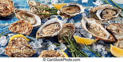 Buffet of fresh shucked oysters on ice with green seaweed...