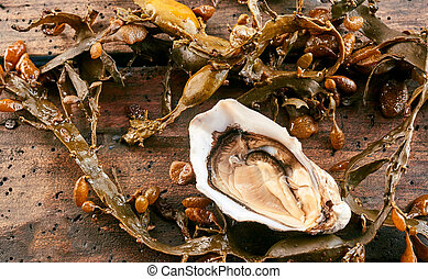 Single opened raw fresh oyster with marine kelp or seaweed...
