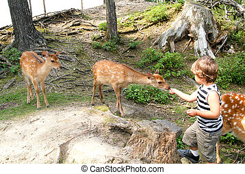Young child is feeding a deer