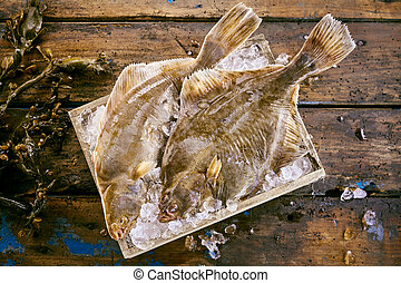 Two fresh flatfish on ice with kelp seaweed - Two fresh...