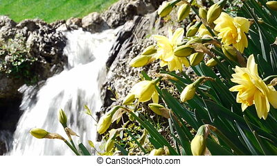 Waterfall park nature flowers - Beautiful waterfall at one...