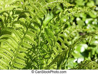 Fern background - Bright green fern background