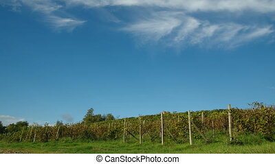 vineyard time lapse in Piedmont, Italy