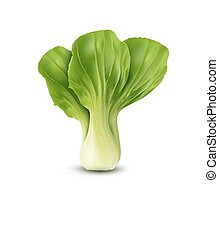 vector Pok Choy isolated, on white background