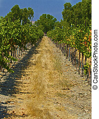 With the harvest now complete these vineyards will enjoy the...
