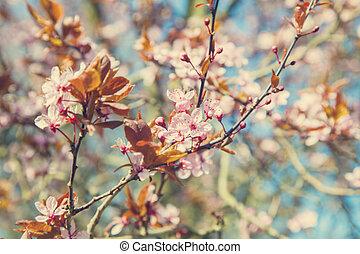 Flowering tree blurry background - Image of flowering tree...