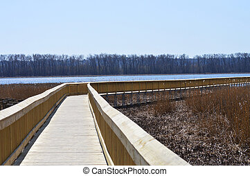 Boardwalk in Wetland - Boardwalk in wetland