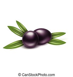 Vector Black Olives Branch with Leaves Isolated on White Background