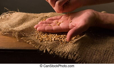 Person sifting grain on the sackcloth - close with nature. A...