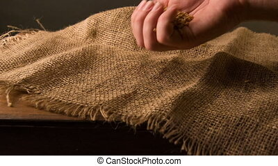 Person sifting grain on the sackcloth - Nice harvest. A...