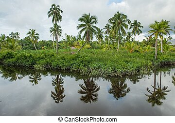 The coast of the wild river in the jungle - the typical...