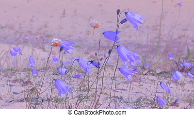 bright bells beautiful wild flowers - blue bells grow on...