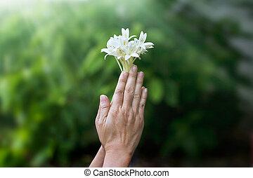 mujer, rezando, con, blanco, flor, en, Manos, en,...