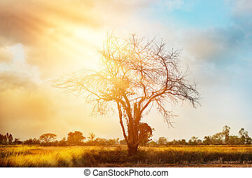 dead tree on colorful sunset background