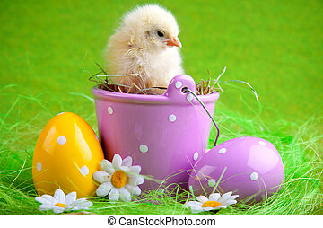 youn chick in easter bucket