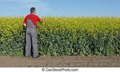 Farmer examine canola field