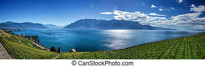 Famouse vineyards in Montreux against Geneva lake.