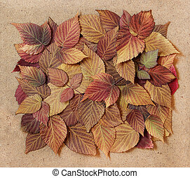 dried fall leaves of plants, elements raspberry leaves laid...