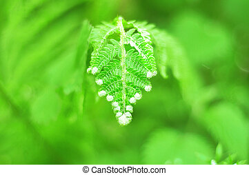 Natural backgrounds with fresh green fern leaves. Close-Up...