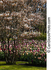 Spring in pastel colors - Spring is blooming in beautiful...