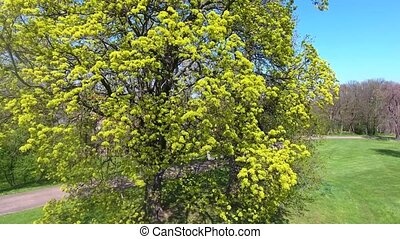 tree green plant summer spring flight video daylight growth