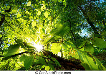 Rays of sunlight beautifully shining through green leaves -...
