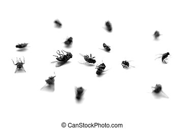 Dead Flies in a Pile - Many dead flies isolated on white...