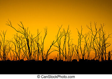 Dead trees in silhouette at sunrise