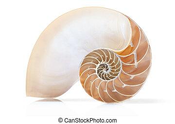Nautilus shell section on white - Nautilus shell section,...