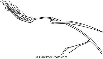 Vector ears of rye