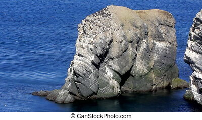 Rock-elephant and bird on forehead of elephant. Barents sea...