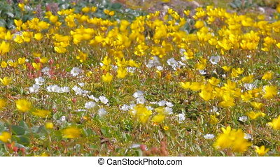 Unexpected wildlife. Incredibly fast bright wild flowers shaking in wind