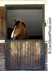 horse farm,animals - daylight close-up photographed horse,...