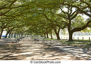 Houston Hermann park Marvin Taylor trail with big oaks at...
