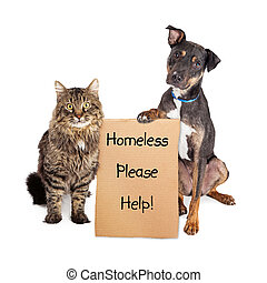 Homeless Dog and Cat With Sign - Rescue cat and dog with...