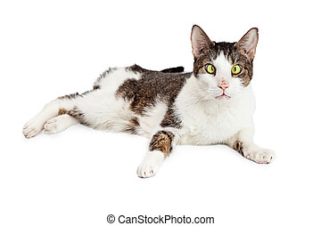 Funny Cross-Eyed Blind Cat - Cross-eyed and blind cat laying...