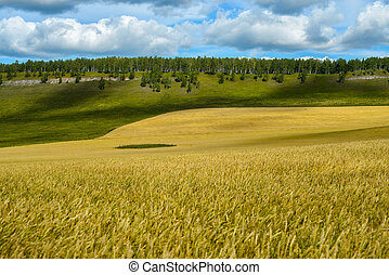 Agricultural field with blue sky
