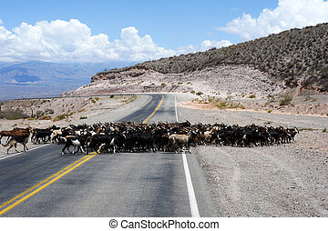 Raod in the middle of Los Cardones national park on...