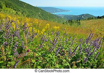 Wild flowers on mountain meadow in Kabardinka, Krasnodar...