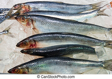 Fresh herring at a fish market - Fresh herring for sale at a...