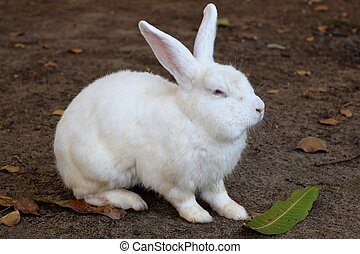 White Bunny - Photograph of a cute white bunny