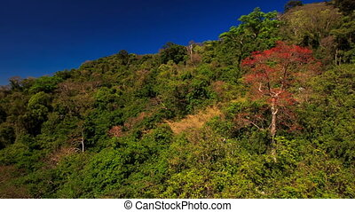 Camera Moves by Green Brown Plants on Hill Slope - camera...