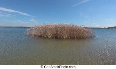 Beautiful lake with reeds on summer day