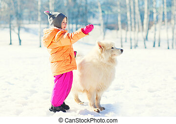 Child with white Samoyed dog on snow in winter park looking...